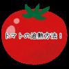 トマト 追熟方法